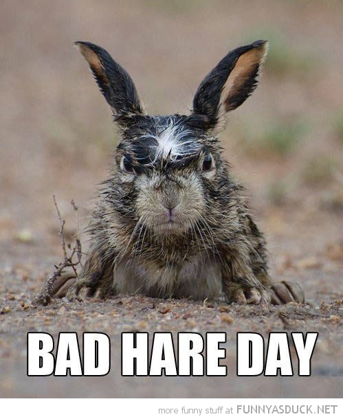 grumpy angry rabbit animal bad hare day funny pics pictures pic picture image photo images photos lol
