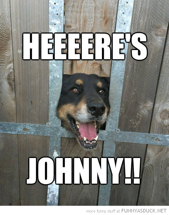 here's johnny dog animal head through fence shining jack nicholson funny pics pictures pic picture image photo images photos lol