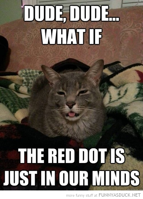high stoned wasted cat lolcat animal dude what if red dot just in our minds funny pics pictures pic picture image photo images photos lol