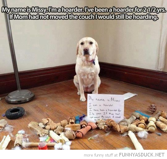 hoarder dog animal bones under couch sofa funny pics pictures pic picture image photo images photos lol