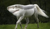 horse head swap duck shark guinea pig animals funny pics pictures pic picture image photo images photos lol
