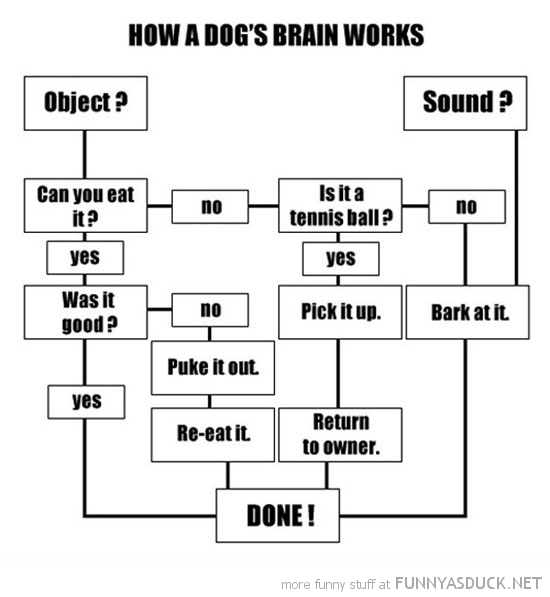 how dogs brain works chart animal funny pics pictures pic picture image photo images photos lol