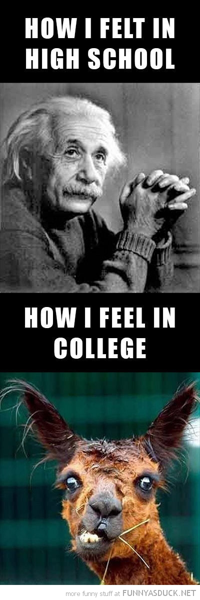 how felt school collage albert einstein crazy alpaca funny pics pictures pic picture image photo images photos lol