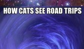 how dogs cats see road trips lolcats animals funny pics pictures pic picture image photo images photos lol
