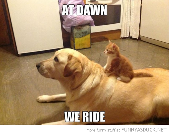 kitten cat lolcat animal sitting dog at dawn we ride funny pics pictures pic picture image photo images photos lol