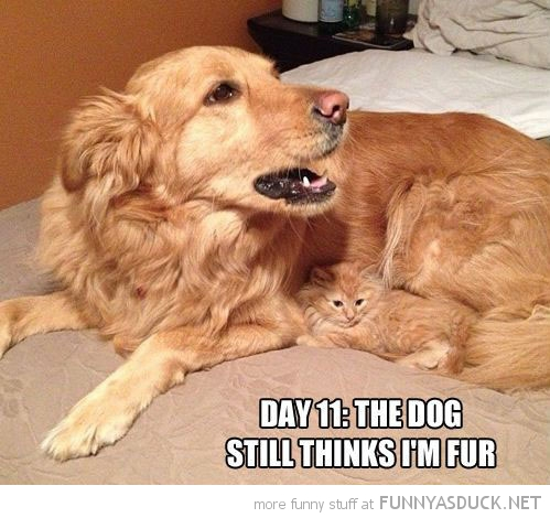 kitten cat cuddled up dog still think fur animal funny pics pictures pic picture image photo images photos lol