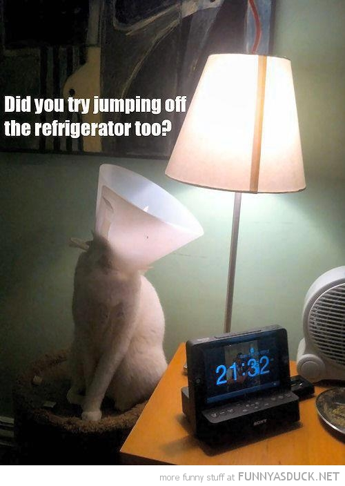 cat lolcat animal lampshade head did you try jump of refrigerator too funny pics pictures pic picture image photo images photos lol