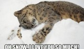 leopard big cat lying snow cub love you funny pics pictures pic picture image photo images photos lol