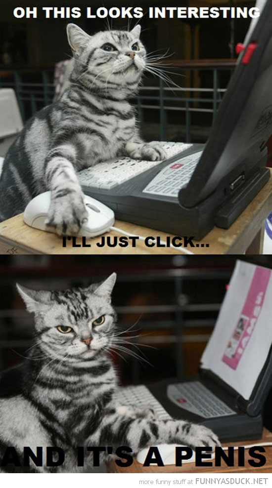 looks interesting cat lolcat animal on internet pc laptop computer click and its penis funny pics pictures pic picture image photo images photos lol