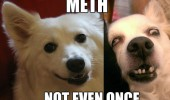 meth not even once dog animal ugly funny pics pictures pic picture image photo images photos lol