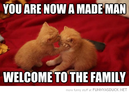 mobster gangster cat lolcat animal now made man welcome family funny pics pictures pic picture image photo images photos lol