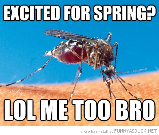 mosquito fly excited for spring me too bro funny pics pictures pic picture image photo images photos lol
