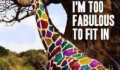multi coloured giraffe animal too fabulous fit in funny pics pictures pic picture image photo images photos lol