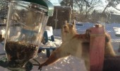 not what looks like squirrel reaching nuts bird feeder animal funny pics pictures pic picture image photo images photos lol