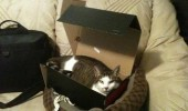 only way get cat lolcat animal expensive bed shoe box funny pics pictures pic picture image photo images photos lol