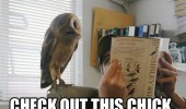owl bird animal reading book check out this chick funny pics pictures pic picture image photo images photos lol