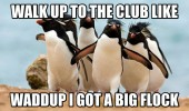 penguins walk up to club animal thrift shop got a big flock funny pics pictures pic picture image photo images photos lol