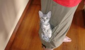real reason cargo pants exist cat lolcat animal pocket funny pics pictures pic picture image photo images photos lol