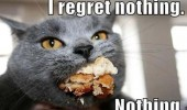 fat cat lolcat animal food mouth regret nothing funny pics pictures pic picture image photo images photos lol
