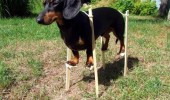 said could be anything dog animal stilts became doberman funny pics pictures pic picture image photo images photos lol