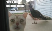 scared cat peacock bird animal open the door funny pics pictures pic picture image photo images photos lol