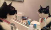self motivation cat lolcat animal looking mirror will catch red dot funny pics pictures pic picture image photo images photos lol