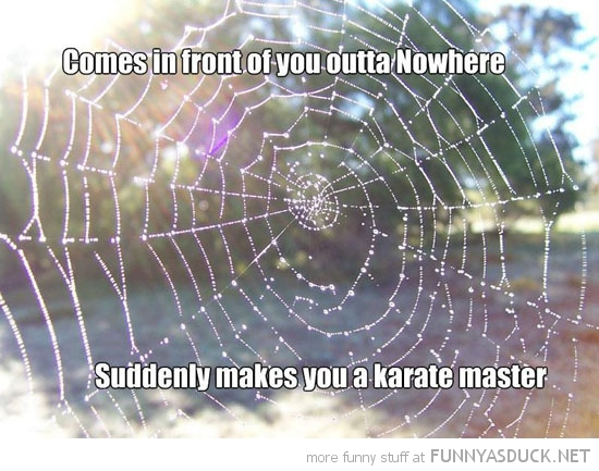 walk into spider web turn karate master funny pics pictures pic picture image photo images photos lol