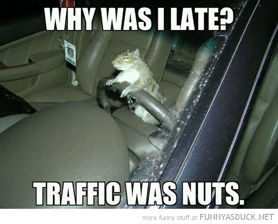 squirrel animal driving car why was i late traffic nuts funny pics pictures pic picture image photo images photos lol