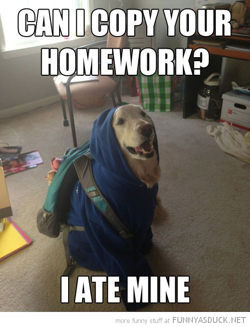 student dog animal backpack bag ate homework funny pics pictures pic picture image photo images photos lol
