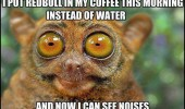 tarsier monkey animal wide eyed coffee redbull see sounds funny pics pictures pic picture image photo images photos lol