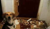 there was a spider dog animal broken door funny pics pictures pic picture image photo images photos lol
