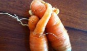vegetables hugging cuddling people so cruel not carrot all funny pics pictures pic picture image photo images photos lol
