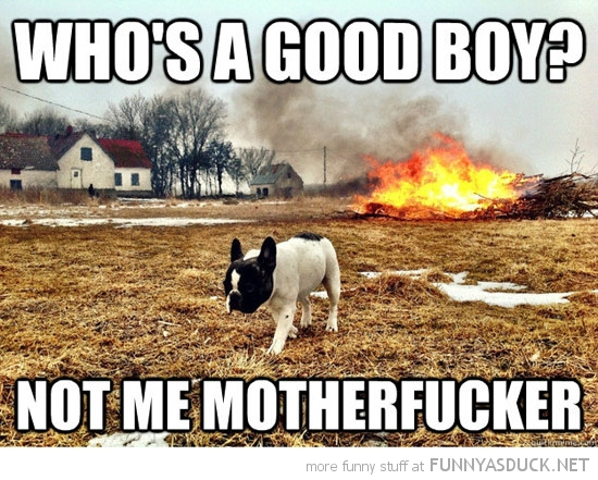 who's good boy not me motherfucker angry dog animal walking away fire funny pics pictures pic picture image photo images photos lol