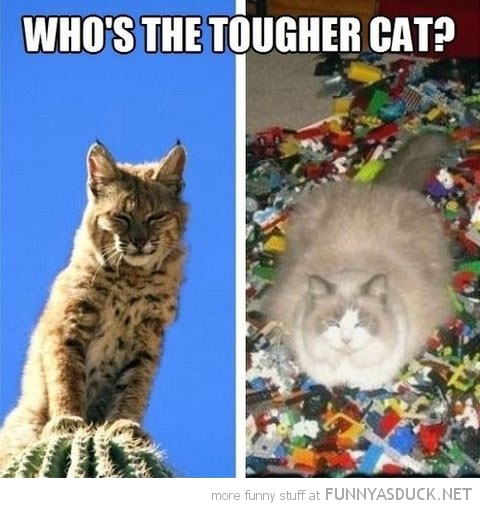 who's tougher cat sitting cactus lego lolcat animal funny pics pictures pic picture image photo images photos lol