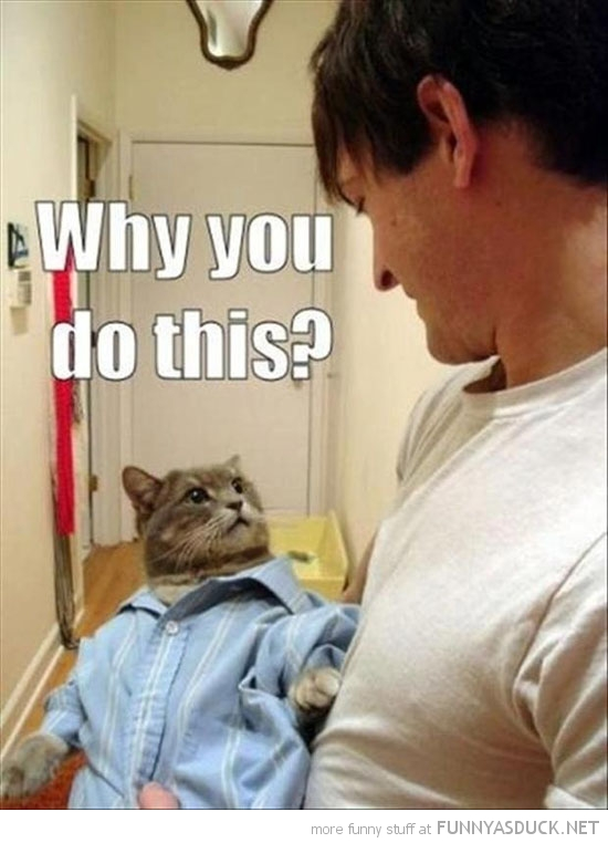 why you do this cat lolcat animal wearing shirt funny pics pictures pic picture image photo images photos lol