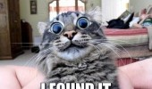 wide eyed cat lolcat animal acid tab found it wasted funny pics pictures pic picture image photo images photos lol