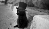 willie wonka cat kitten top hat world pure pure imagination funny pics pictures pic picture image photo images photos lol