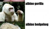 albino animals horse sarah jessica parker funny pics pictures pic picture image photo images photos lol