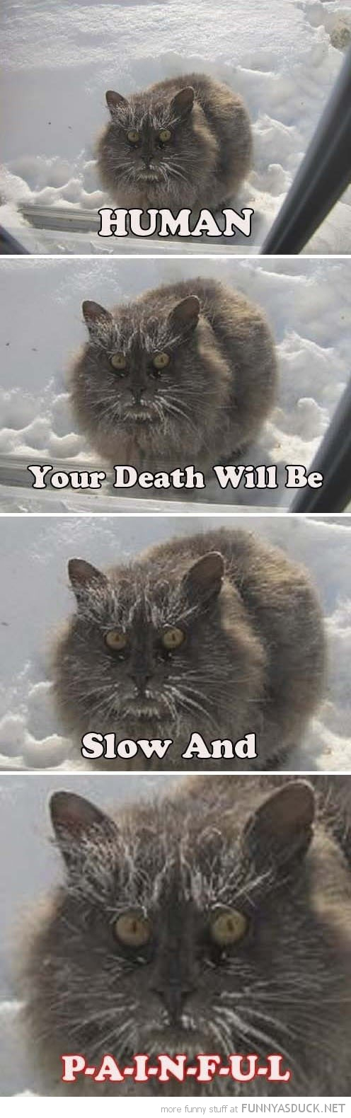 angry cat lolcat animal snow human death slow painful funny pics pictures pic picture image photo images photos lol