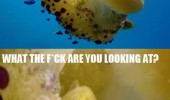 angry fish jelly animal what you looking at funny pics pictures pic picture image photo images photos lol