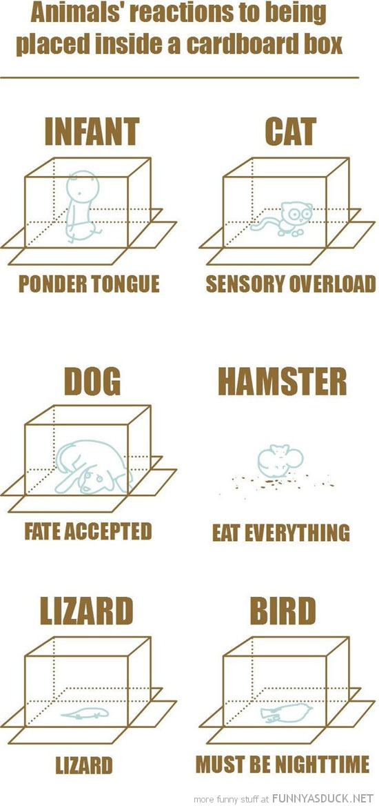 animals reactions placed inside cardboard box comic funny pics pictures pic picture image photo images photos lol