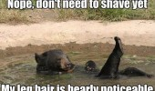 bear bath water animal shave legs bearly noticeable funny pics pictures pic picture image photo images photos lol