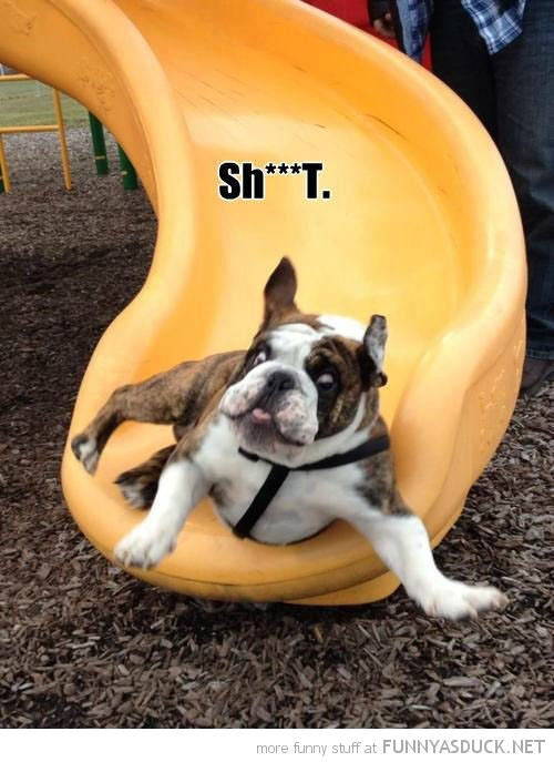 bull dog animal scared chute slide shit funny pics pictures pic picture image photo images photos lol