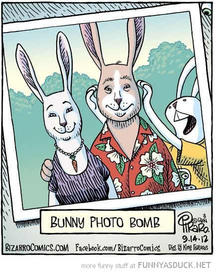 bunny rabbit photo bomb comic funny pics pictures pic picture image photo images photos lol