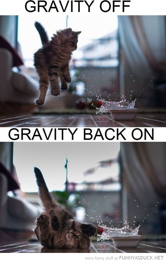 cat kitten lolcat animal jumping falling gravity on off funny pics pictures pic picture image photo images photos lol