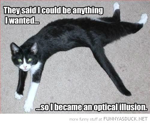 cat lying down twisted body animal optical illusion funny pics pictures pic picture image photo images photos lol