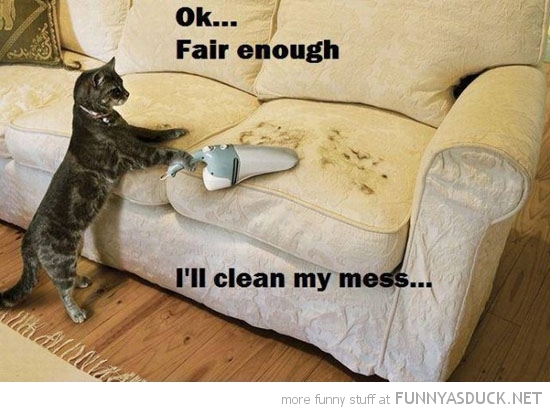 cat lolcat animal vacuum hair couch sofa clean mess  funny pics pictures pic picture image photo images photos lol