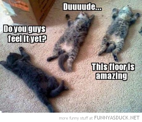 cats kittens lolcats animals lying sun floor is amazing funny pics pictures pic picture image photo images photos lol