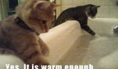 cats lolcats animals checking bath water warm enough funny pics pictures pic picture image photo images photos lol