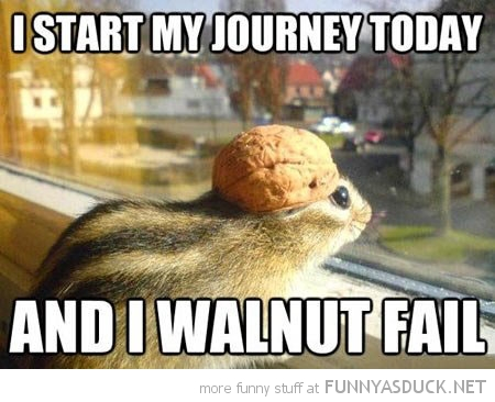 chipmunk animal start my journey today won't fail funny pics pictures pic picture image photo images photos lol